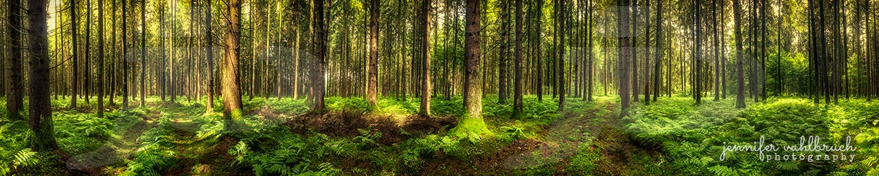 Endless Trees - Riedschachen, Germany